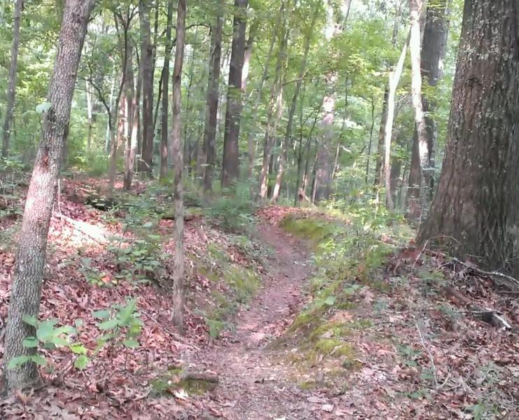 Nice wooded trails.  Beginner friendly.