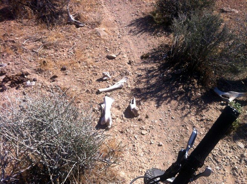 The desert is harsh in summer.....some don't make it through...