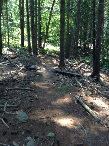 Maine Sport Trails - Log obstacles