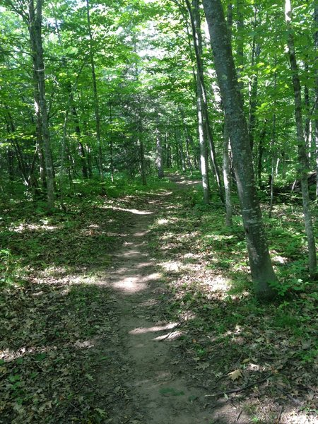 Flat, wide singletrack of Gnome Loop at Michigan Tech's Tolkien Trails.