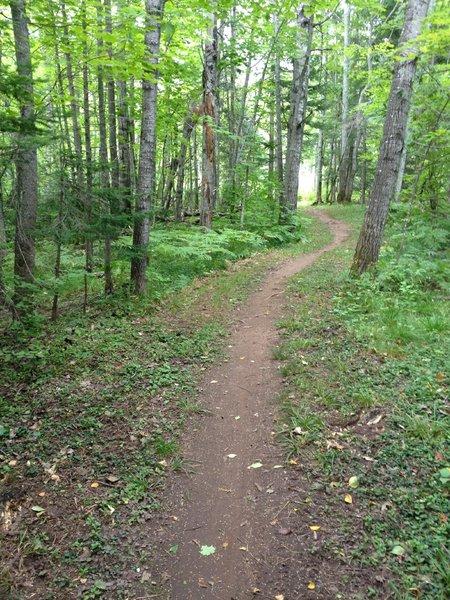 Meandering on Elf Loop at Michigan Tech's Tolkien Trails.