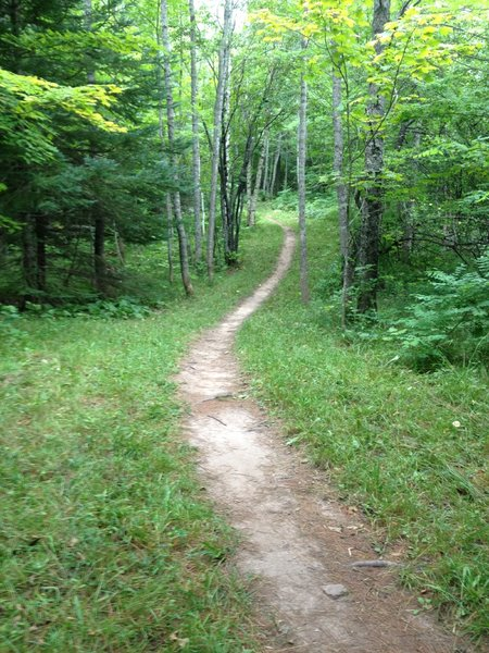 Traversing a small meadow on Elf Loop at Michigan Tech's Tolkien Trails.