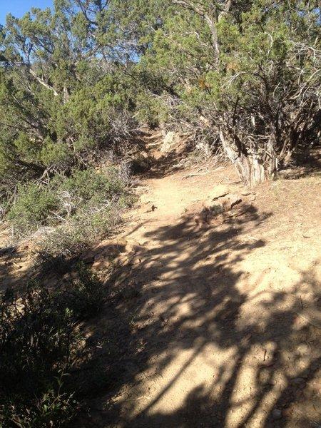 Climbing through nice singletrack