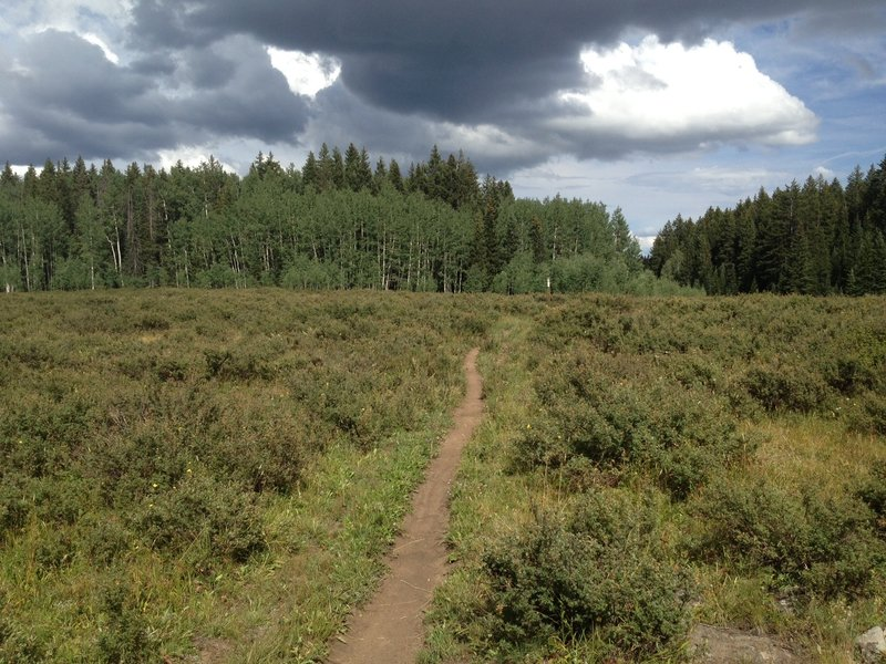 A meadow with darkening skies.