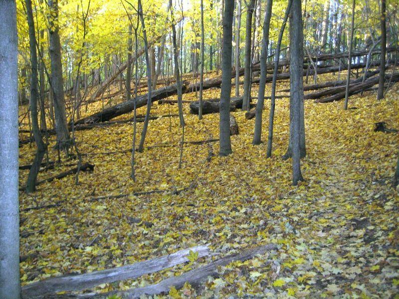 Green Loop, fall season