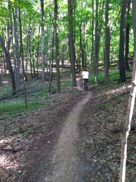 Alpha Trail