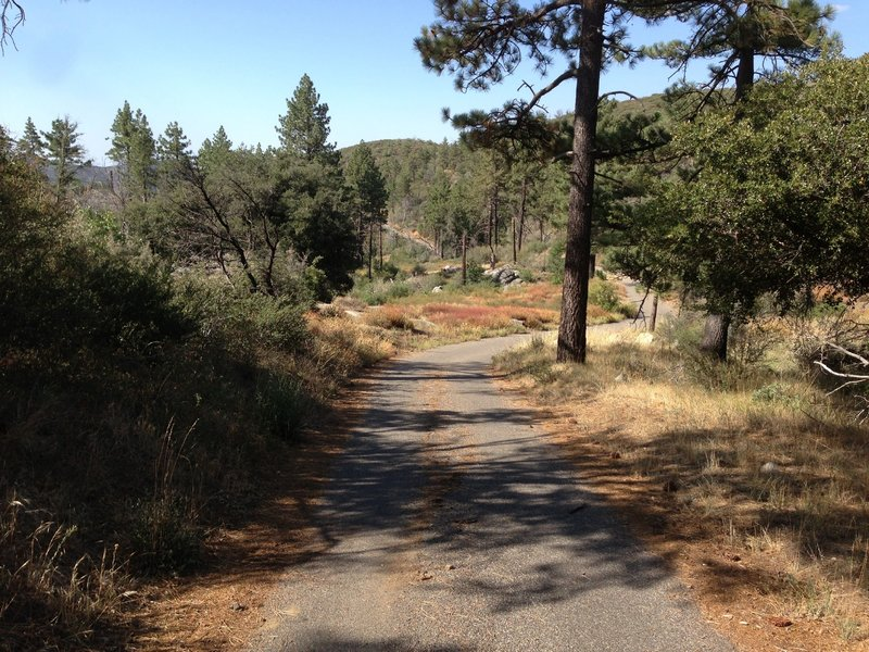 Upper fire road, inside pine forest.