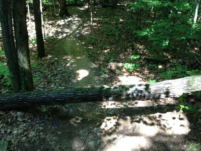 As of 08/29/2013 there is a tree over the trail.