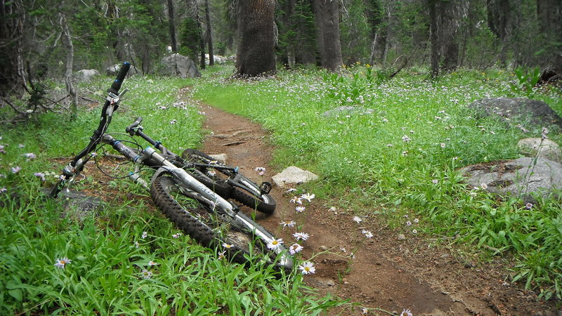 Smelling the daisies along Hole-in-the-Ground Trail. Had a downpour early in the ride, and everything was damp and tacky. Beautiful conditions.