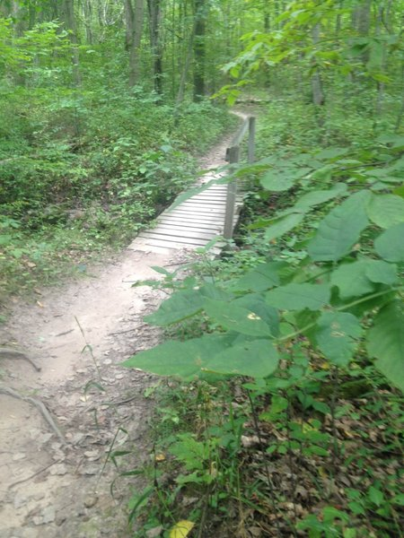 Classic nature of the trail