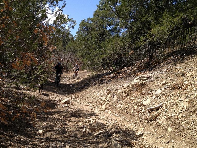 Descending on the Pinyon Trail