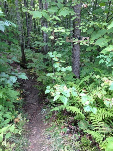 The end of the Pitch Pole Trail at Camden Snow Bowl, where it meets the Jibe Trail