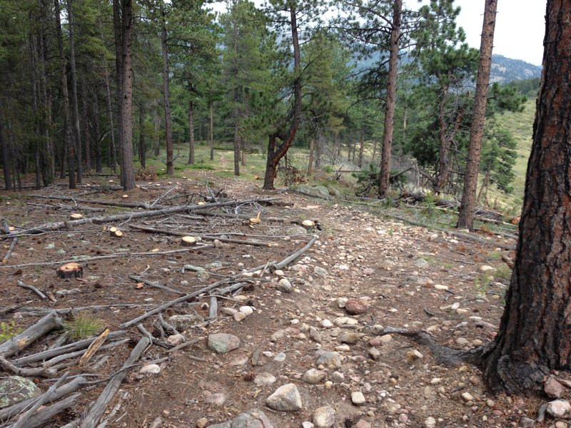 Evidence of Forest Service Fuel mitigation project.