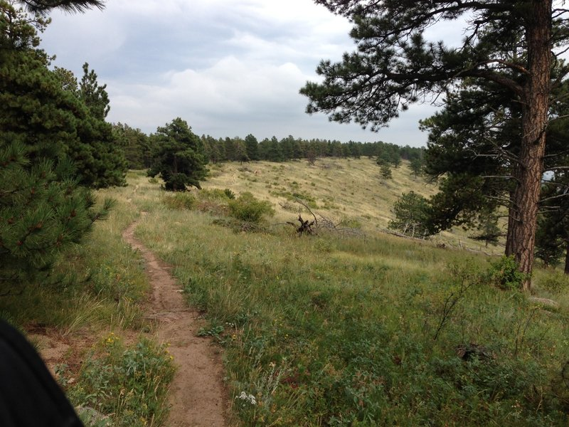 Trail along the ridge and forest edge.