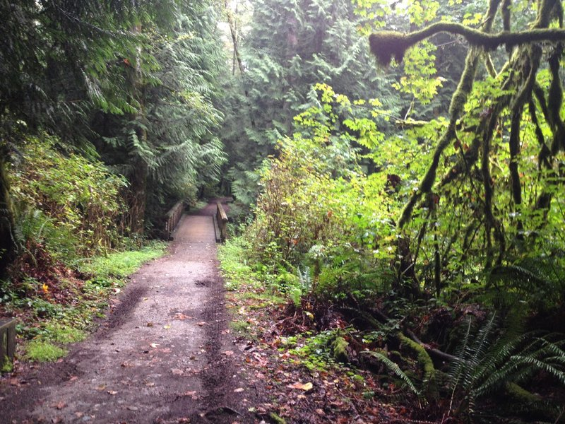 The watershed is filled with deep, lush vegetation and in best conditions after rainfall (or during light rainfall).  Take it easy around the several wooden bridges, they can be very slippery for knobby tires.