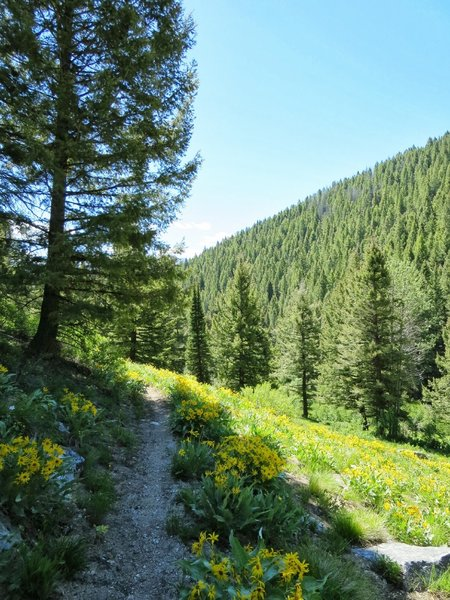 Idaho wildflowers lining the trail