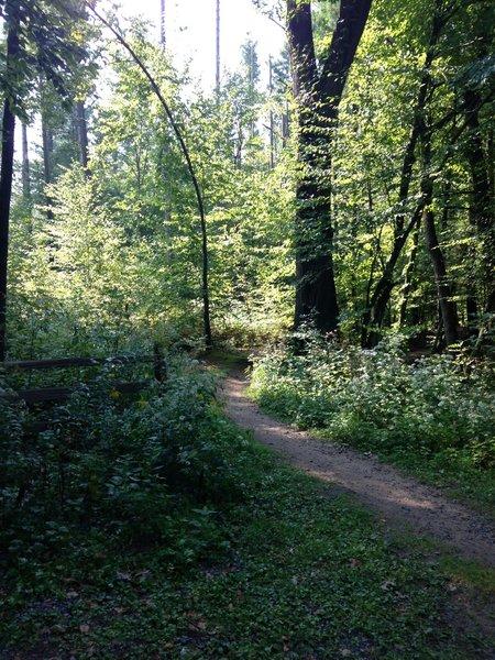 Trail Entrance - Harder Loop