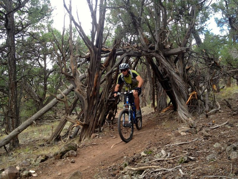 Cool feature on the Bogus Trail