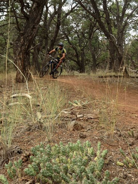 High speed cruise on the Bogus Trail