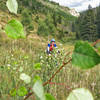 K enjoying the lower aspen groves