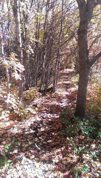 Top of Bicentennial Trail