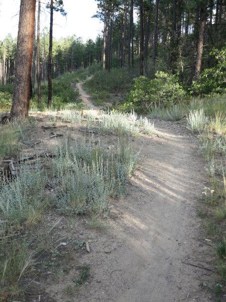 Descending Perimeter trail.