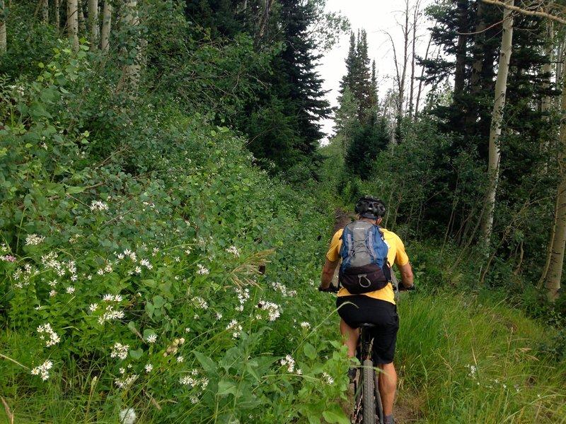 Mellow and pretty on Keystone Trail.
