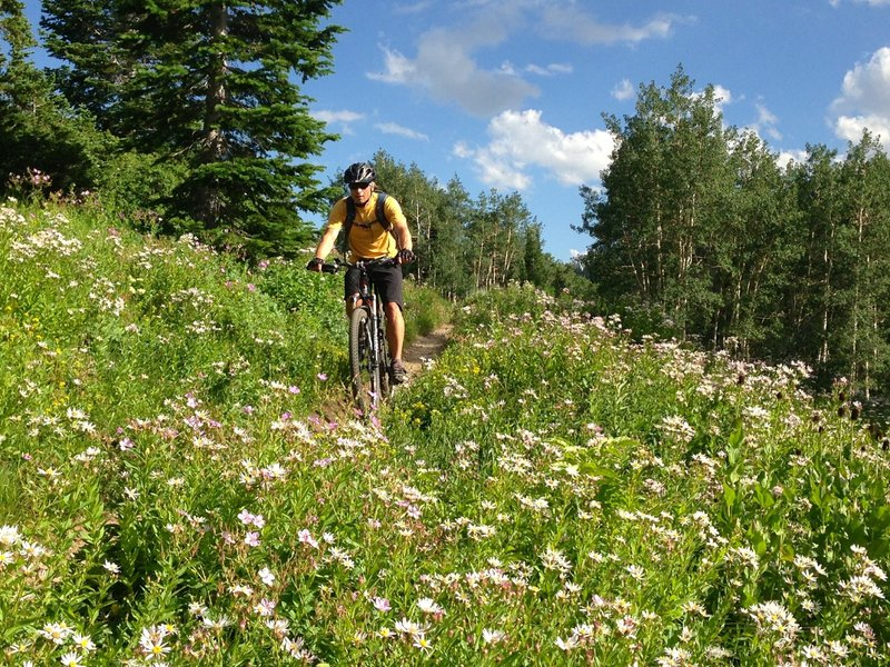 If the big mountain views don't win you over, the wildflowers might!