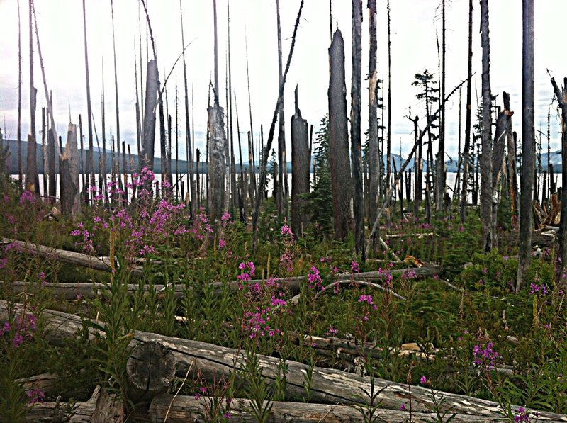 Summer flowers rise up through the old burn