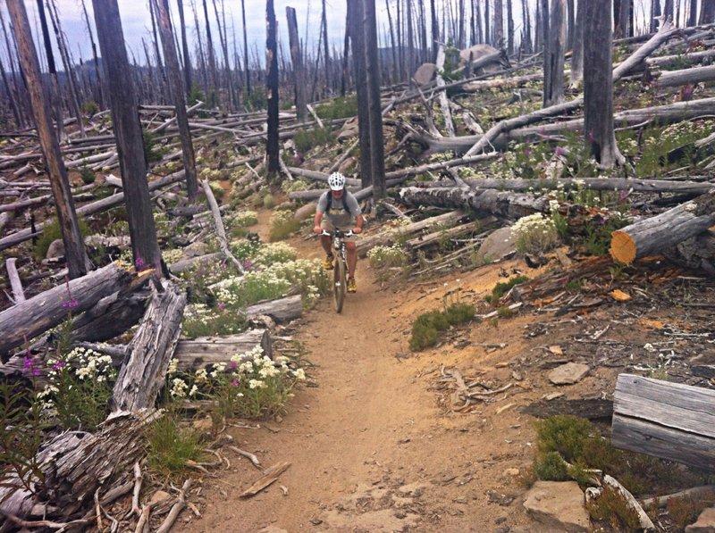 Burnin' up the trail!