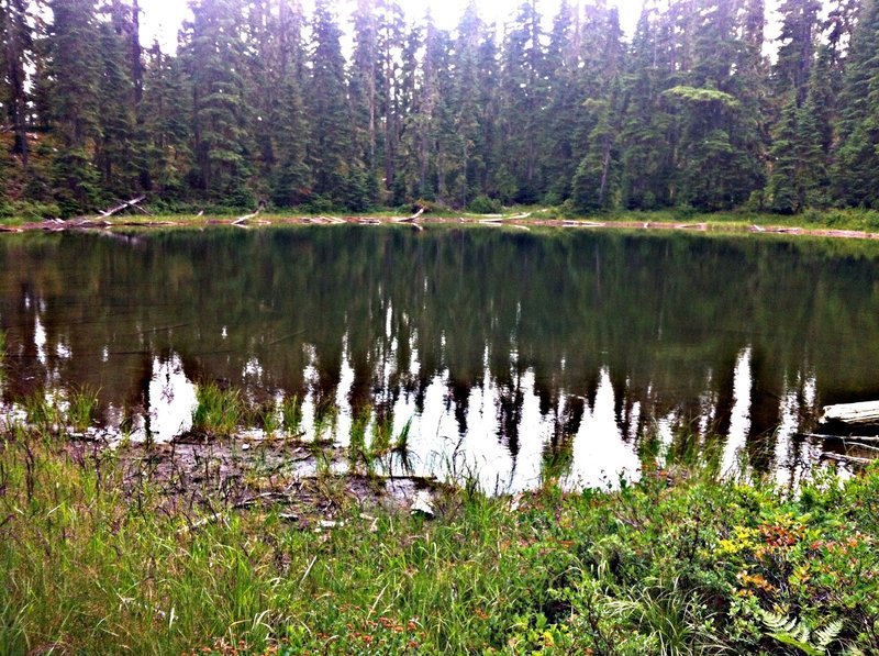 One of the MANY ponds dotting the landscape around Waldo Lake