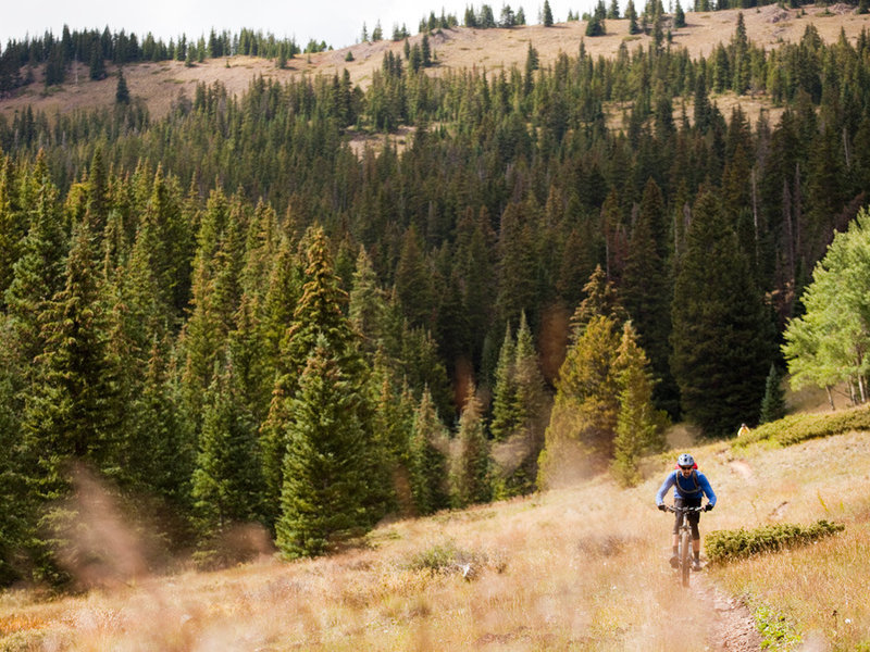 Tight singletrack in the high meadows of Silver Creek trail