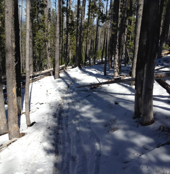 Downhill start of Swamp Wells Trail
