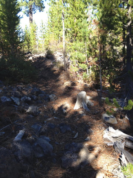 Trail is great, though a little primitive at times.