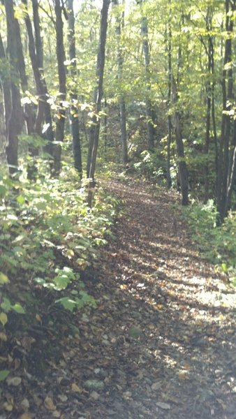 trail dusted with fall leaves