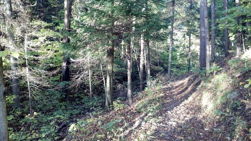 short section of mixed conifer/deciduous forest, stunning views