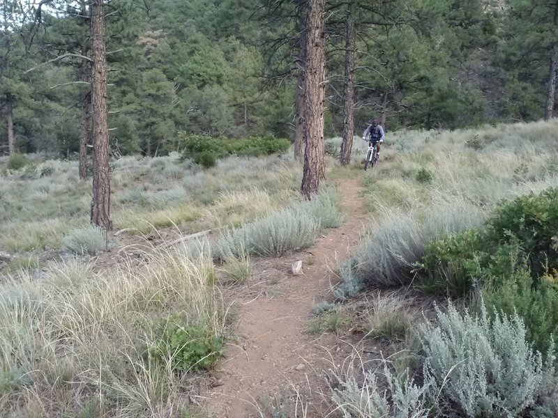 Top of the trail where you start getting into the Ponderosa Trees.
