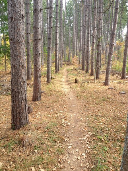 Climbing through the pines to the dual slalom start on Sure Would Trail.