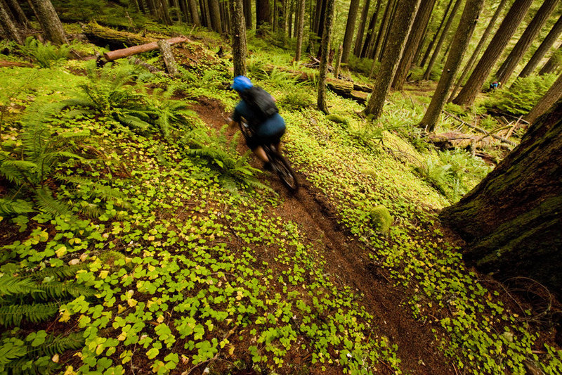Tire Mountain has some of the biggest forest you've ever seen.