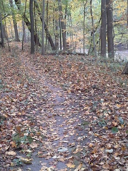 Skirting along Quarter Run Creek