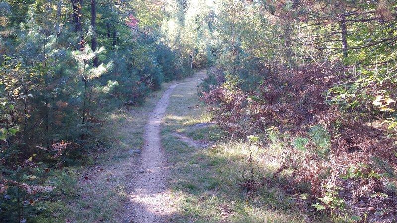 Mineral Site Trail start
