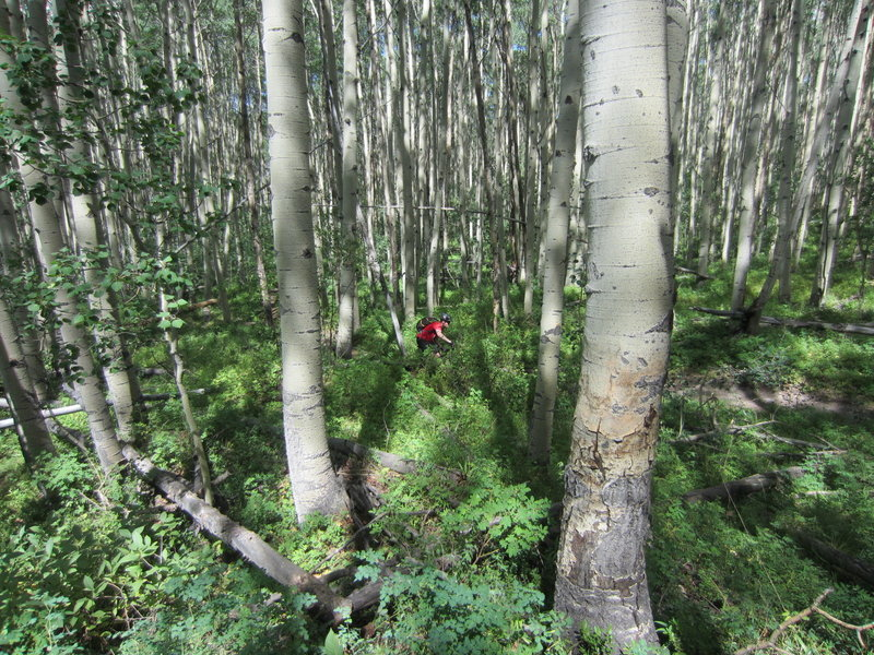Sweet riding through the Aspens!