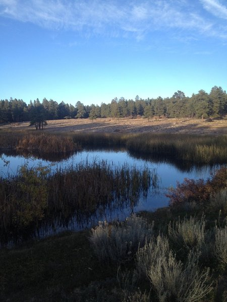 The first pond is often filled with wildlife including ducks, geese, frogs and songbirds.