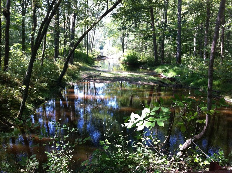 Cedarville State Forest swamp