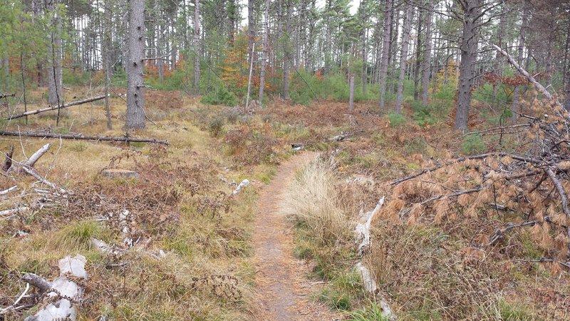 Hemlock Logged Area