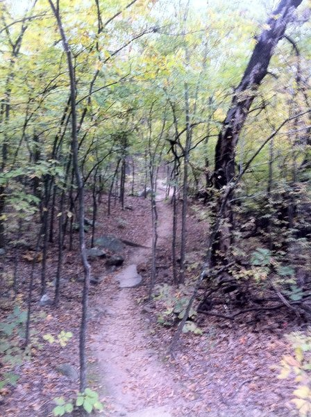 A section of Techno/Millennium trail.