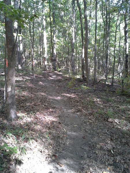 Reroute along the CW Trail MP 9.5