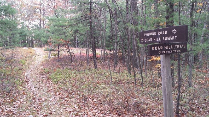 Bear Hill Summit