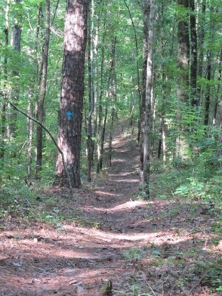 A great downhill run or steady climb on the Log Jump Trail