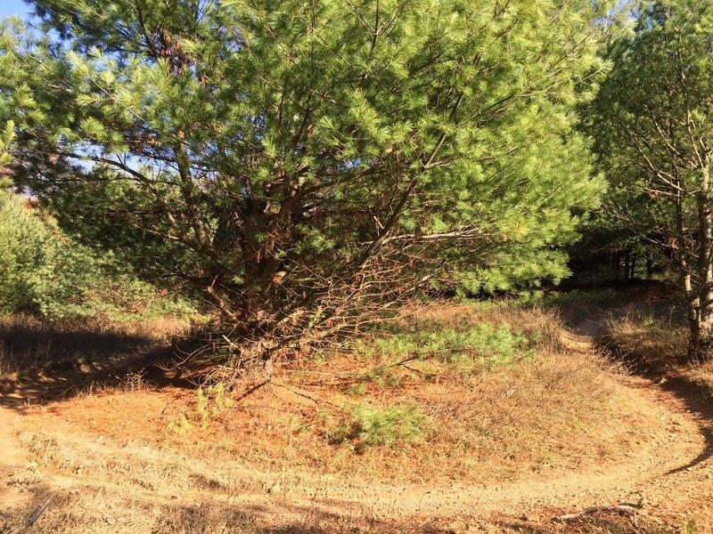 Lower Pine Grove